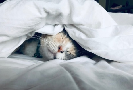 calico cat sleeping under white covers on a white bed