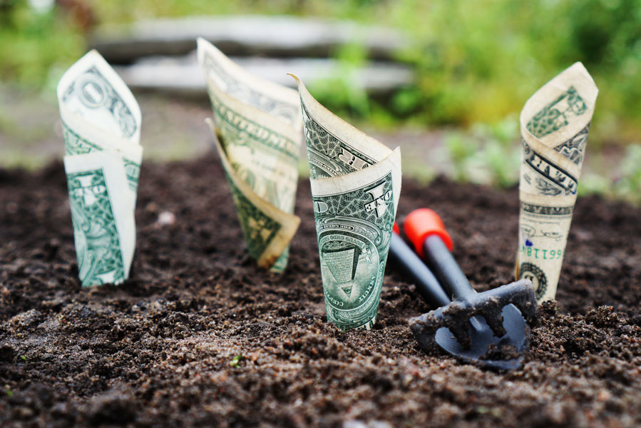Someone planted money in soil hoping for it to grow